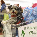 Evento Conad, un cane dentro ad un carrello con acqua san benedetto