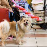 Evento Conad - 20 anni, un cliente con un cagnolino