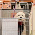 I nostri clienti, un cagnolino dentro al carrello